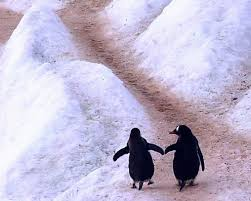pingvinpar-4